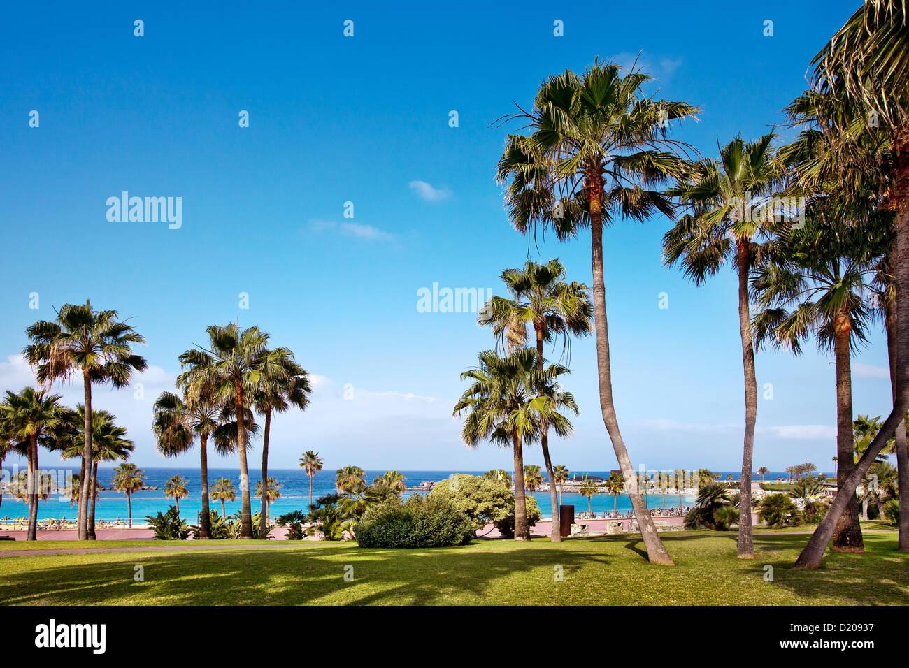 Blick auf Palmen und Meer, Playa Amadores, Puerto Rico, Gran Canaria, Kanarische Inseln, Spanien, Europa Stockbild
