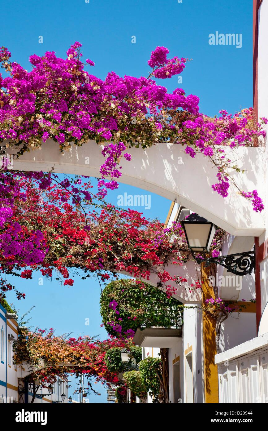 Häuser mit Blumen, Puerto de Mogan, Gran Canaria, Kanarische Inseln, Spanien, Europa Stockbild