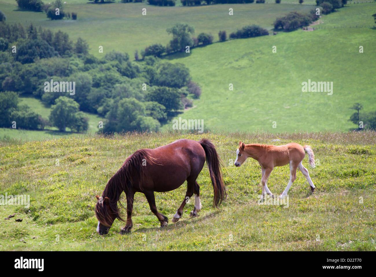 Pferd und faul. Stockbild