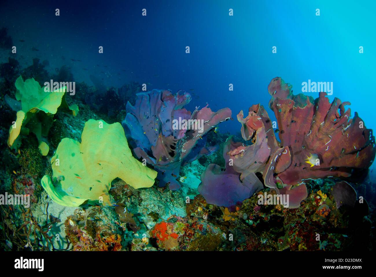 Bunte Schwämme in diesem Unterwasser Riff. Raja Ampat, West Papua ...