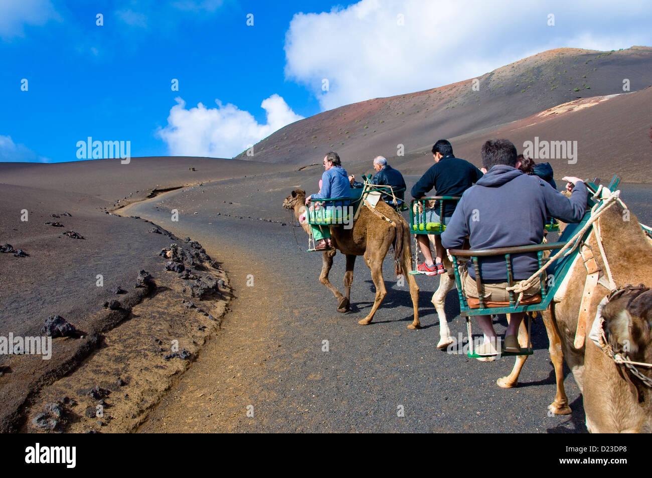 Kamel-Safari, Nationalpark Timanfaya, Lanzarote, Kanarische Inseln, Spanien Stockbild