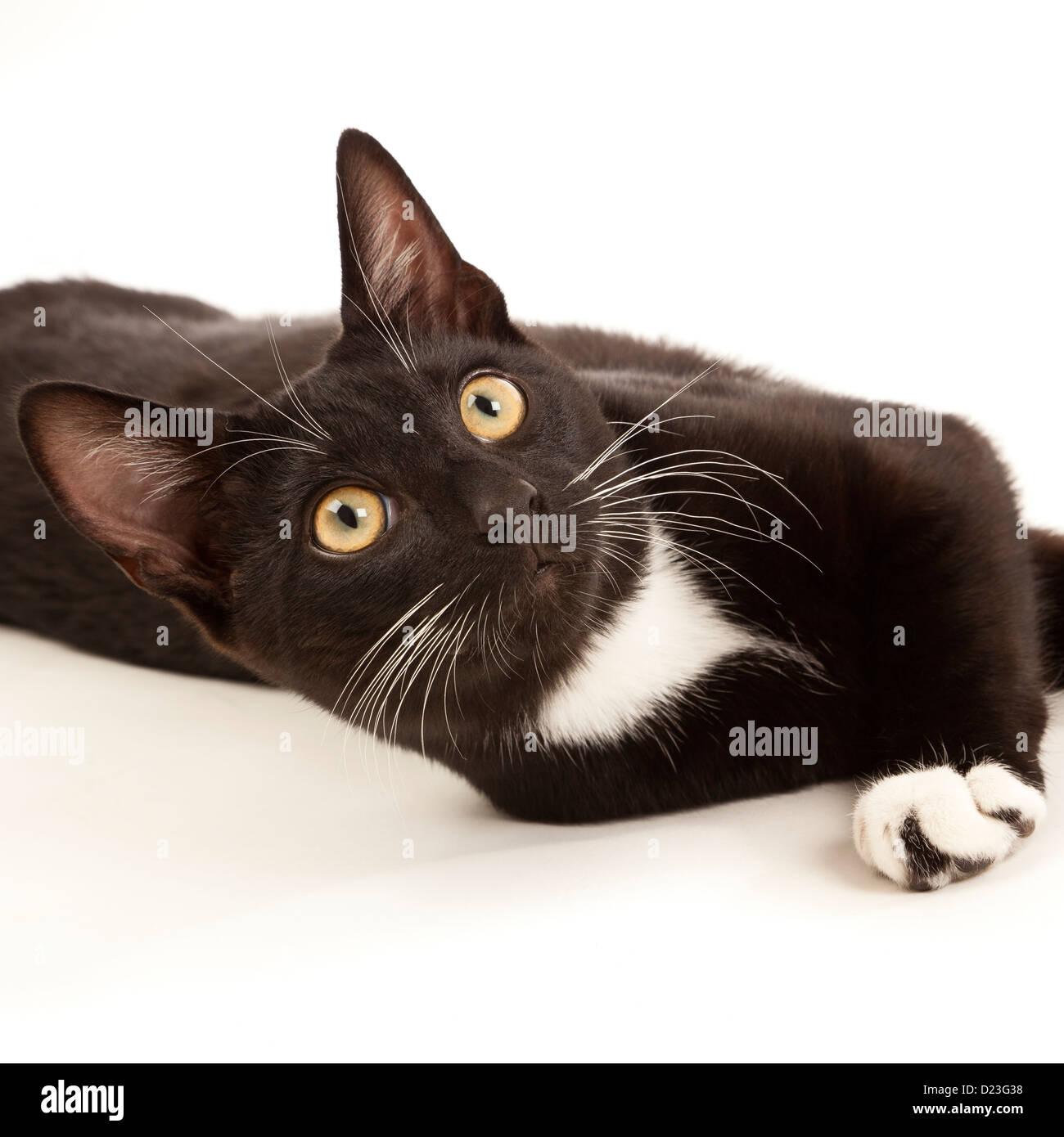 Eine junge schwarze und weiße Katze liegend auf einem weißen wieder gemahlen suchen Stockbild