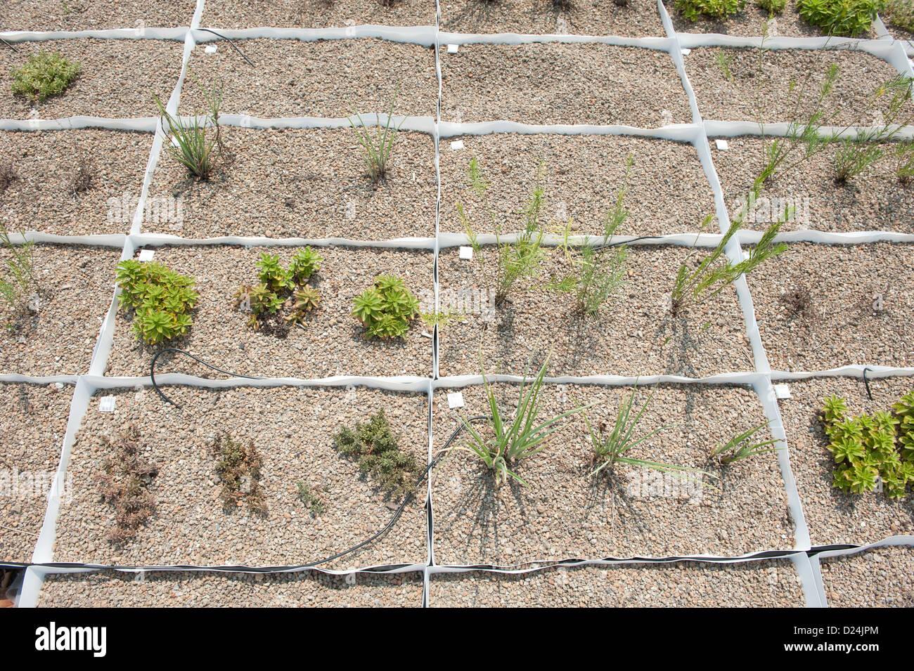 Dachbegrunung Pflanzen Auf Dem Display Auf Dem Mid Atlantic Grune