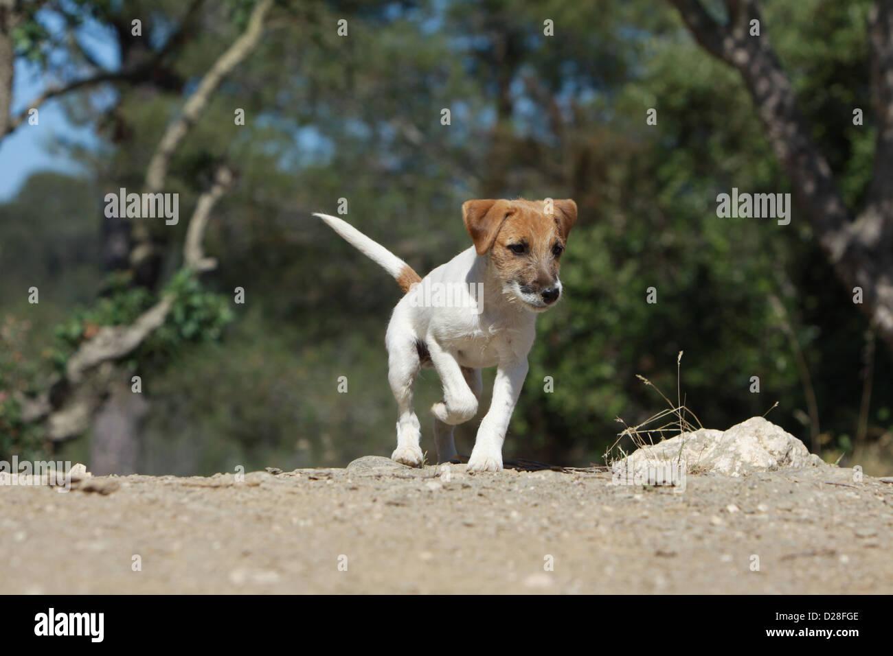 Bild Hundepfote