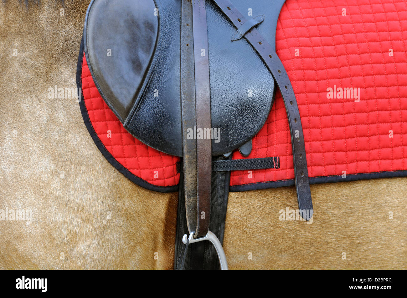 Nahaufnahme von einem Pferdegeschirr Stockfoto