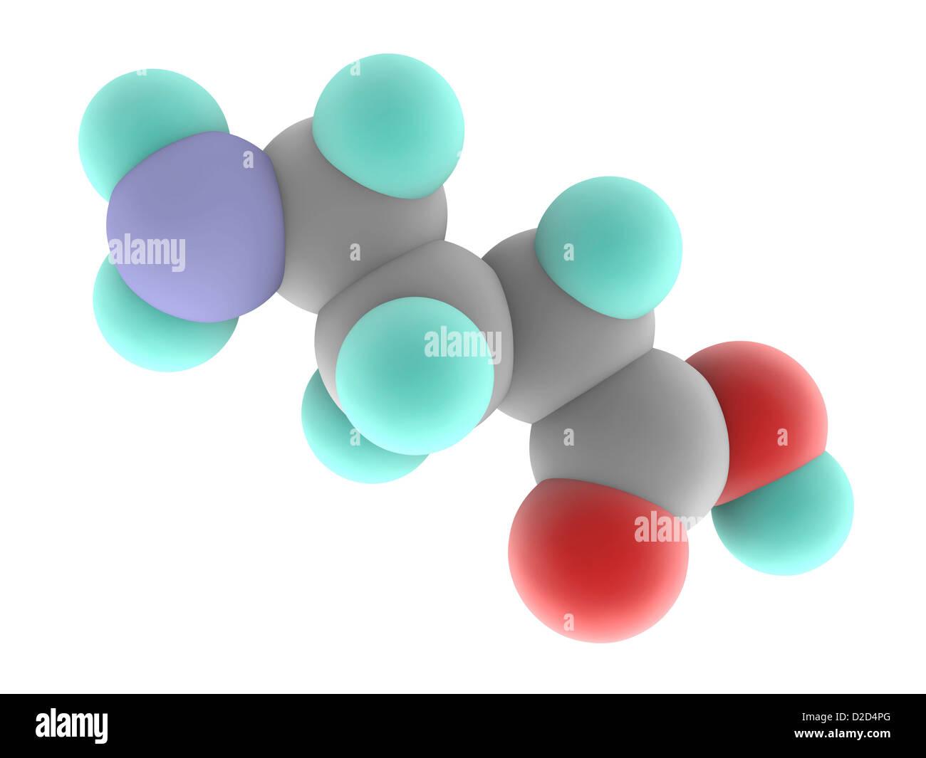 Gamma - Aminobuttersäure GABA Molekülmodell Main hemmenden ...