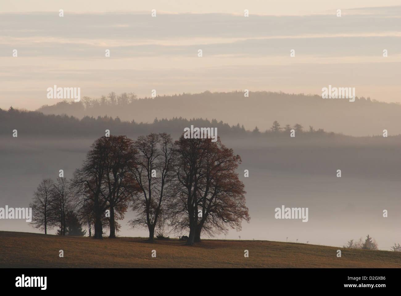 Strukturgruppe, Morgen zwischen Salmendingen in der Schwäbischen Alb, Bäume im Nebel, Stockbild