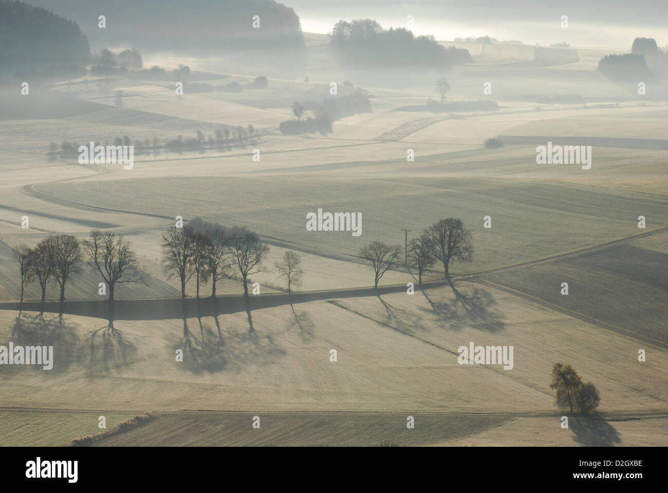 Morgen zwischen Salmendingen in der Schwäbischen Alb, Bäume im Nebel, Stockbild
