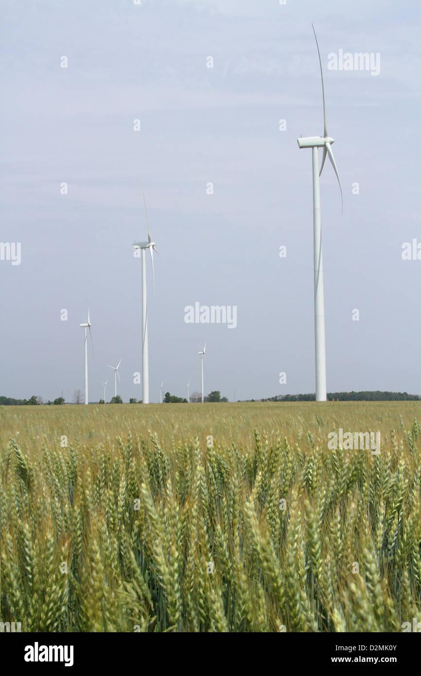 Windmühle für die Erzeugung elektrischer Energie. Weizenfeld im Vordergrund. Stockbild