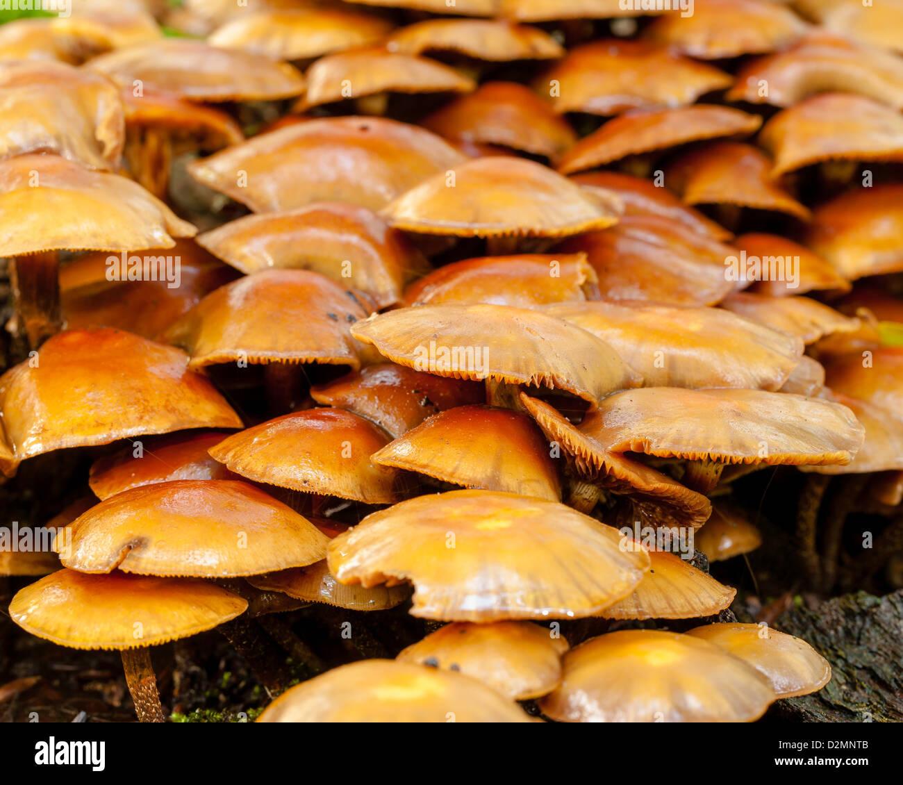 large mushroom tree stump stockfotos large mushroom tree stump bilder alamy. Black Bedroom Furniture Sets. Home Design Ideas