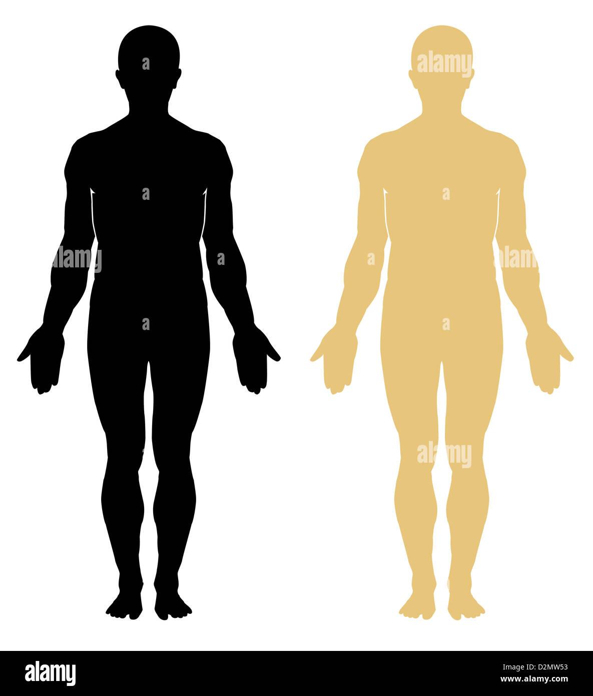 Gliederung des menschlichen Körpers. Anatomie. Männlich Stockfoto ...