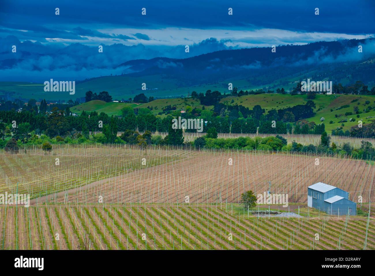 Kleines Haus im landwirtschaftlichen Bereich im westlichen Tasmanien, Australien, Pazifik Stockbild