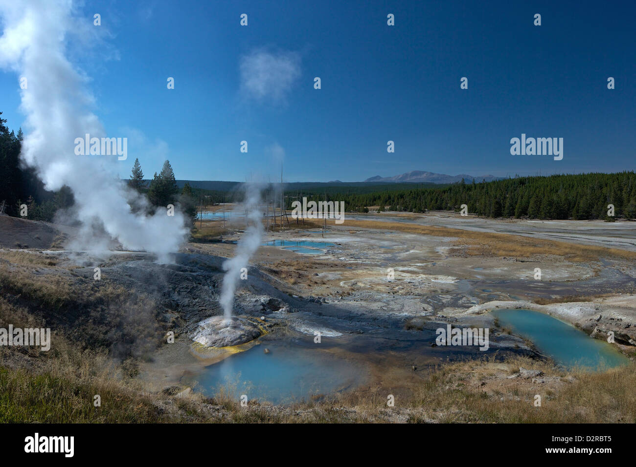 Fumarolen (Dampfdüsen) in Porzellan-Becken, Norris Geyser Basin, Yellowstone-Nationalpark, Wyoming, USA Stockbild
