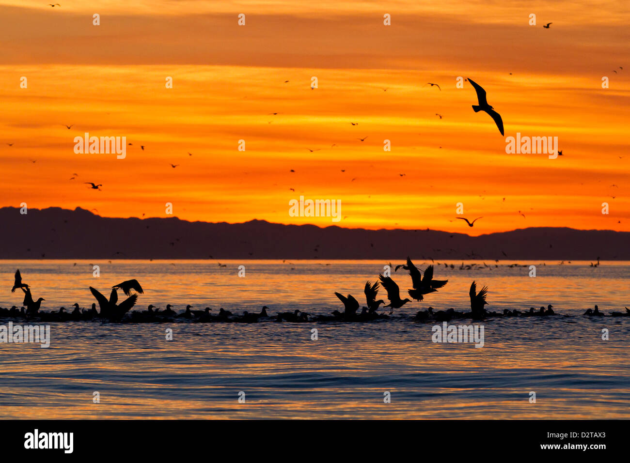 Sunrise, Isla Rasa, Golf von Kalifornien (Sea of Cortez), Baja California, Mexiko, Nordamerika Stockbild