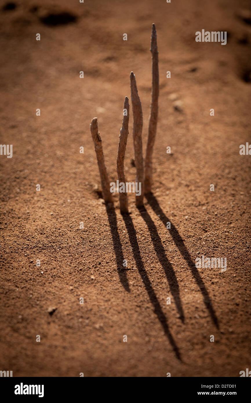 Kleine Pflanzen in den trockenen Boden Sarigua Nationalpark (Wüste), Herrera Provinz, Republik von Panama. Stockbild