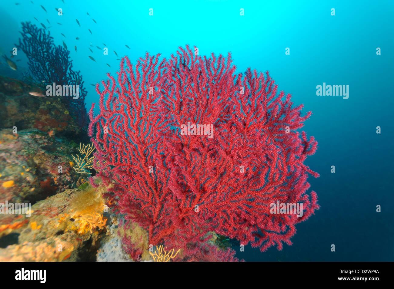 Korallen Mittelmeer