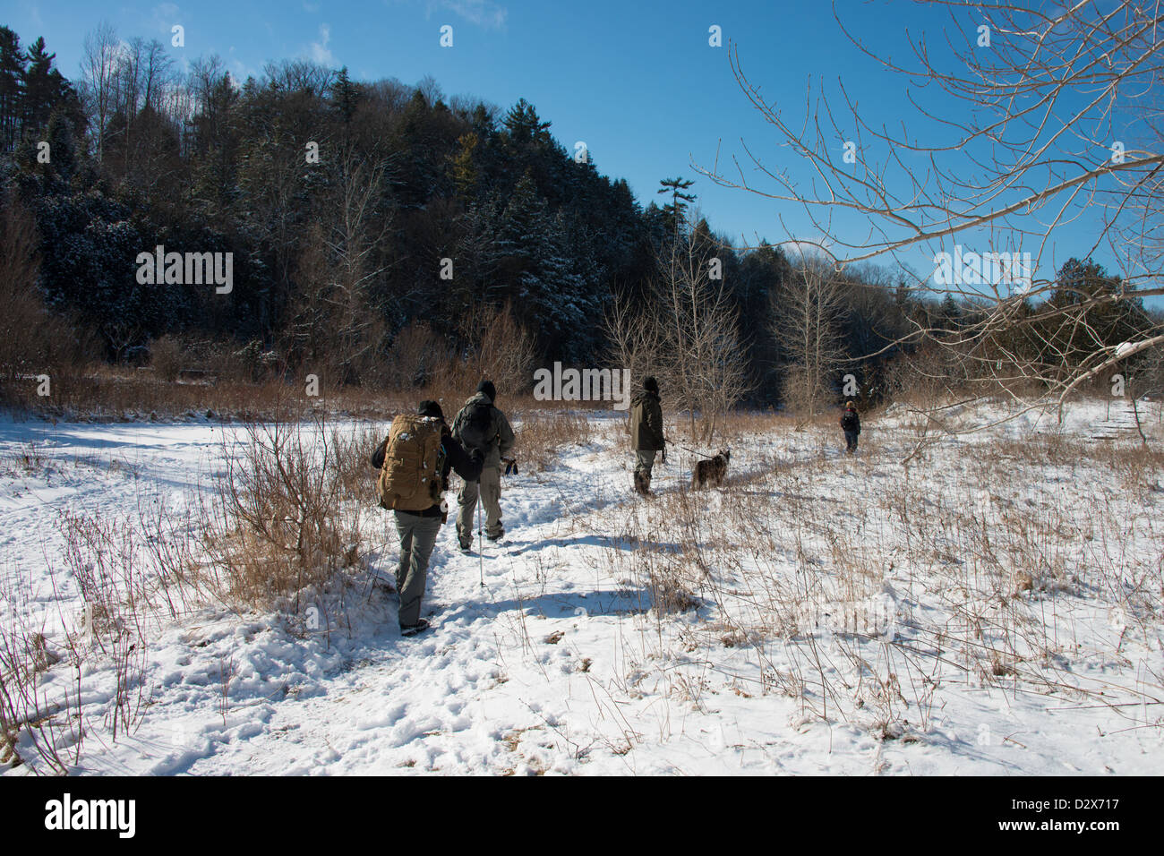 Winterwandern Sie im Rouge Valley National Park in Toronto, Ontario, Kanada. Stockbild