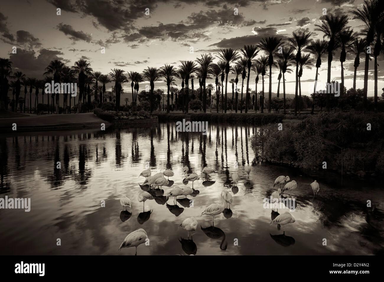 storm bird stockfotos storm bird bilder seite 2 alamy. Black Bedroom Furniture Sets. Home Design Ideas