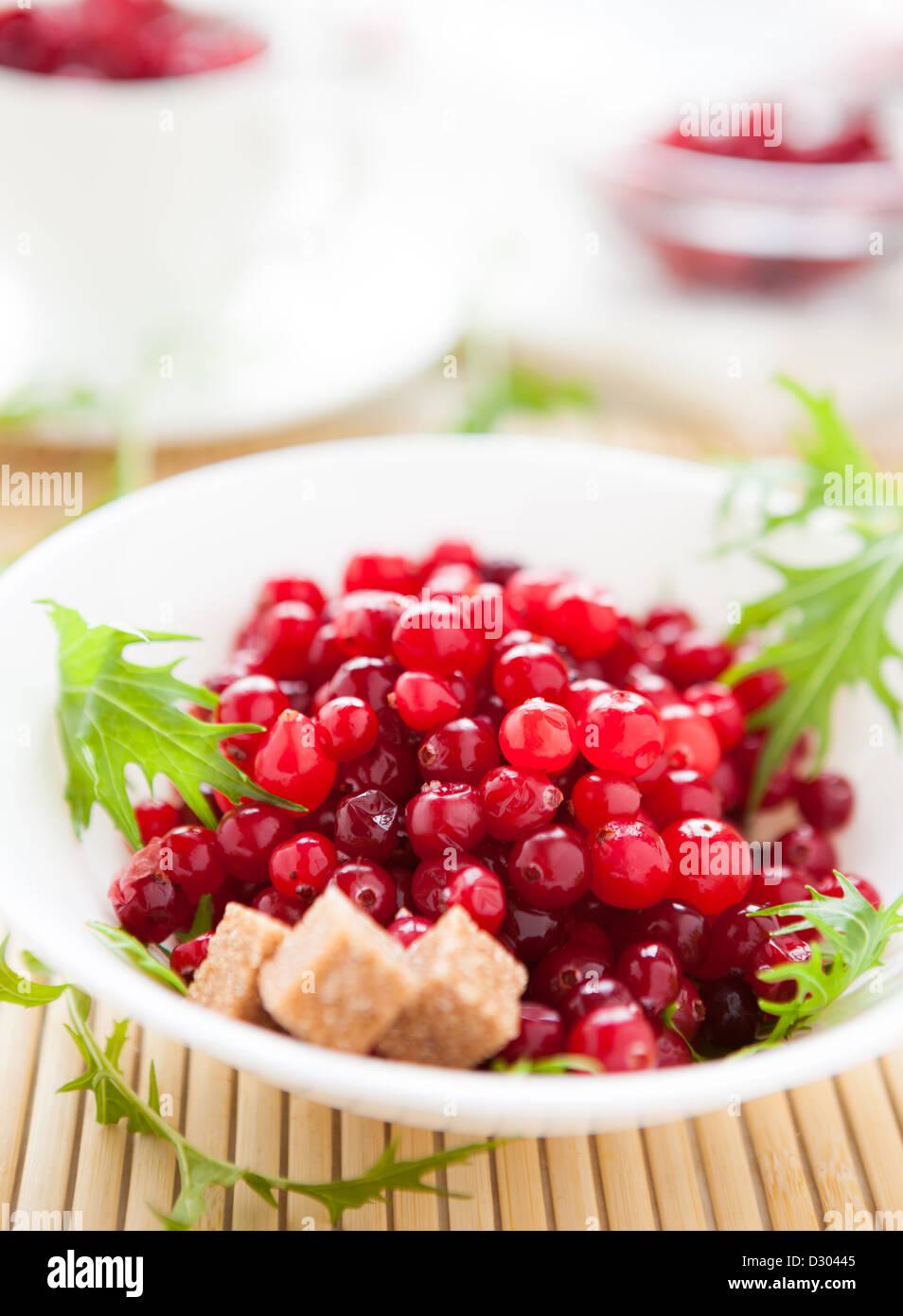 Cranberry mit Rohrzucker in einer Schüssel weiß, Nahaufnahme Stockbild