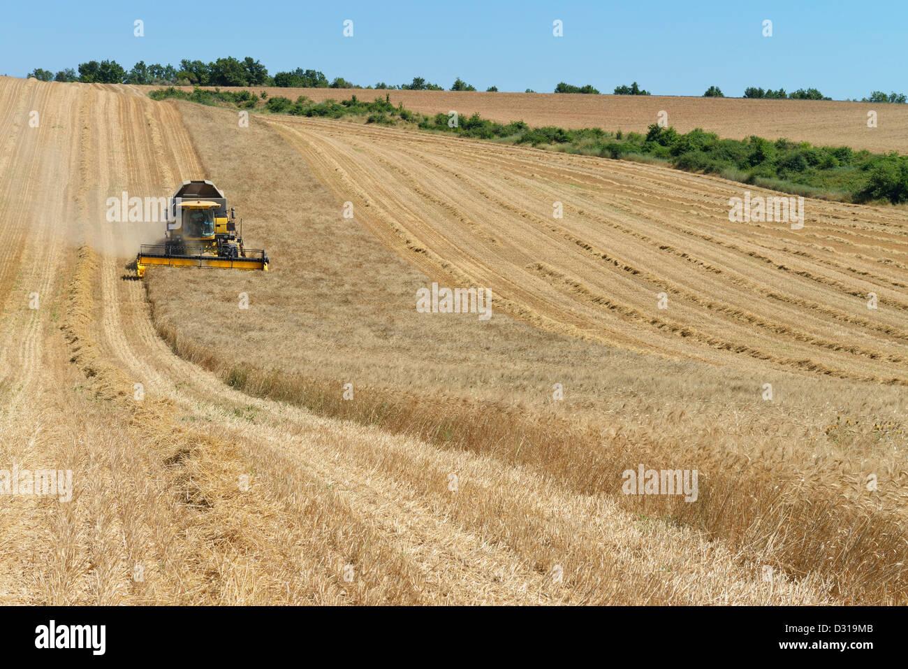 Mähdrescher im Weizenfeld im Sommer, Valensole, Provence, Frankreich Stockfoto