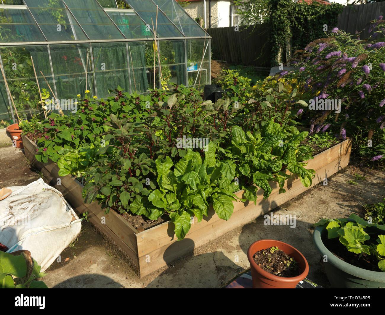 Hochbeet Mit Salat Spinat Mangold Und Pastinake Im Garten