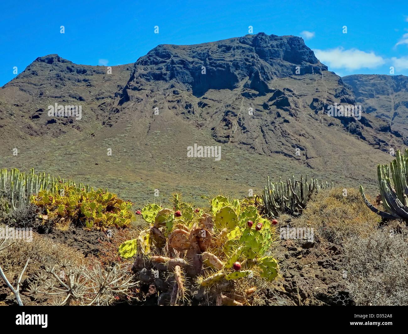 Punta Teno Landschaft Stockbild