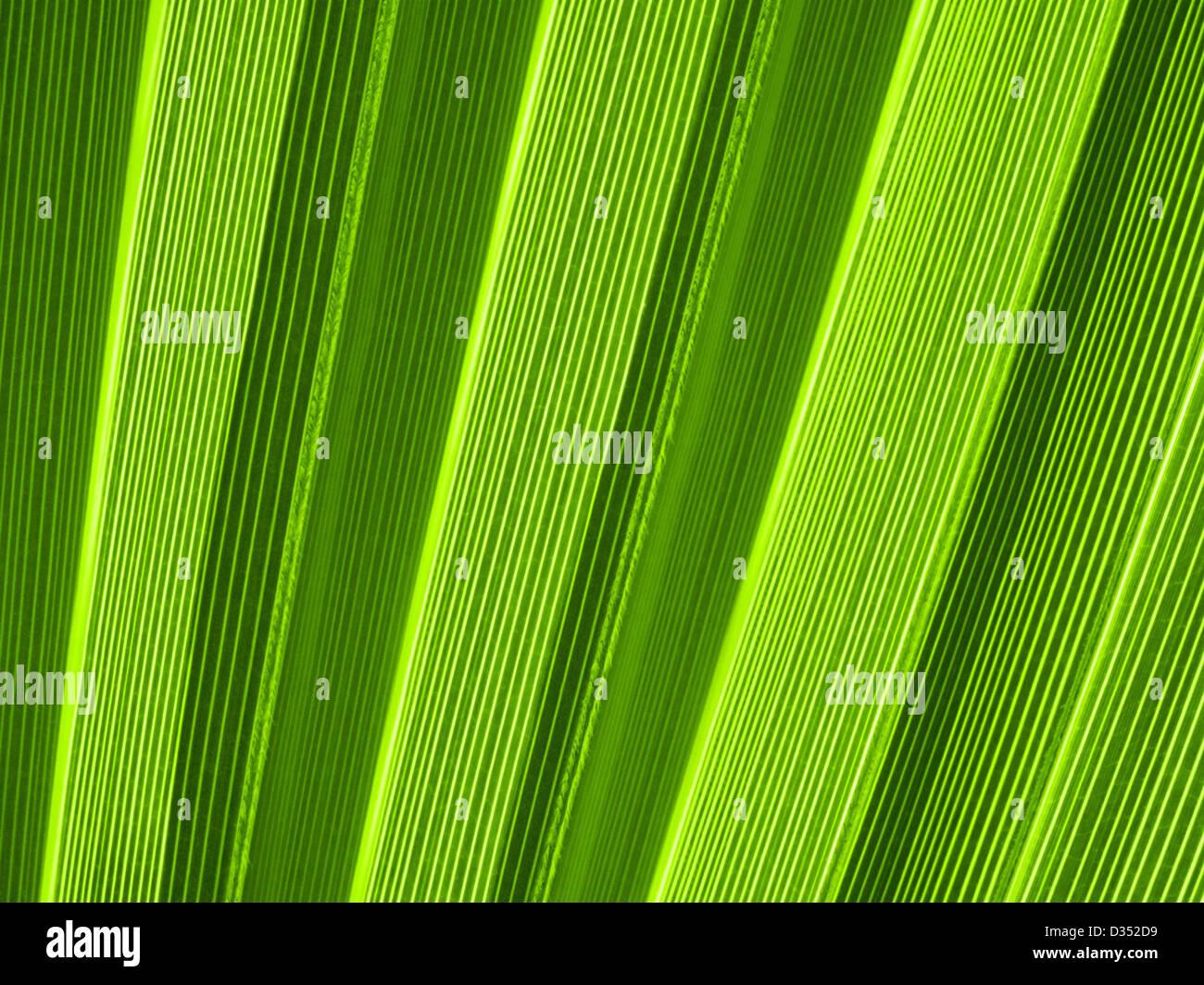 Makroaufnahme einer tropischen Palmblatt Stockfoto