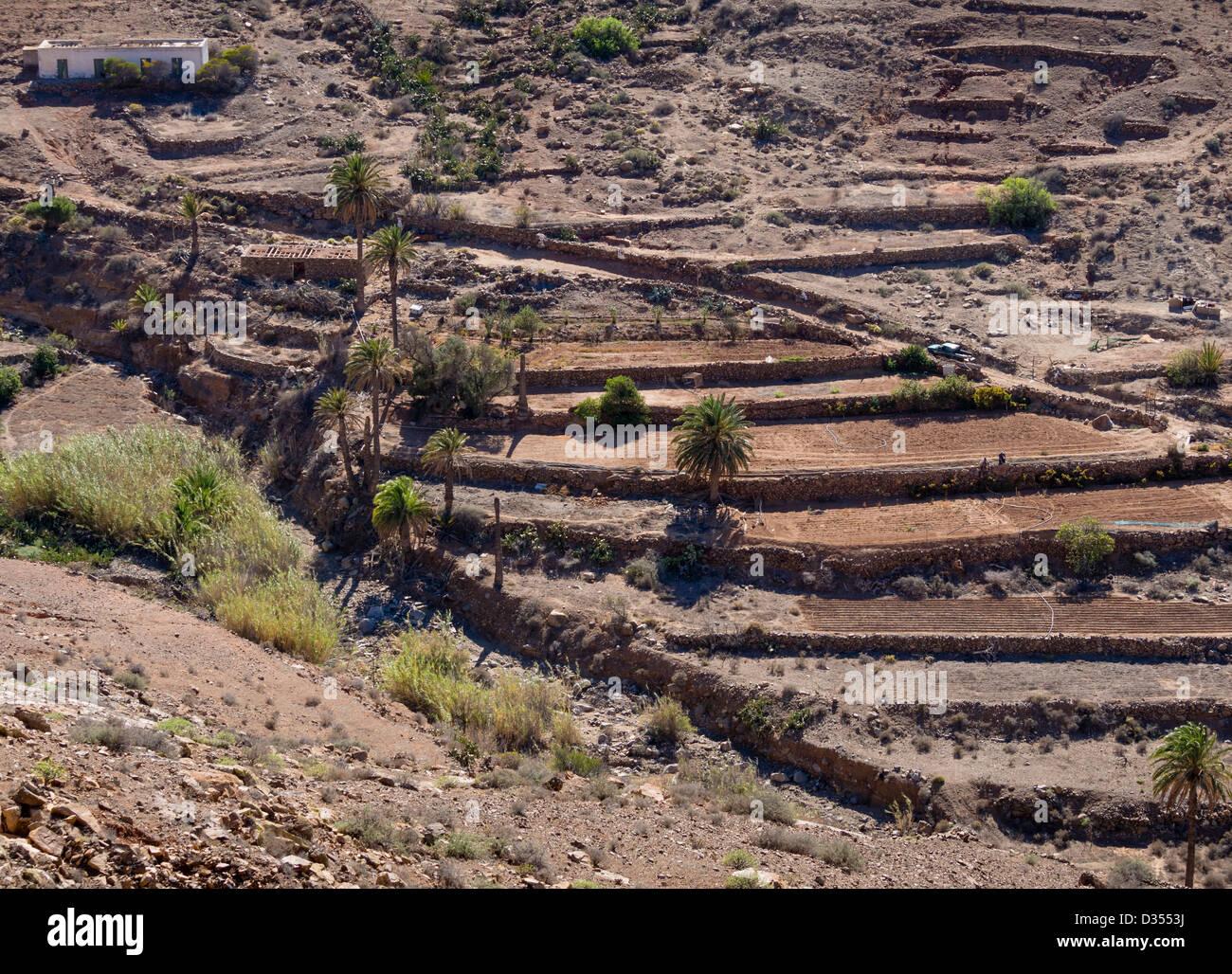 Eine Oase im Parque Rural de Betancuria, Fuerteventura. Stockbild