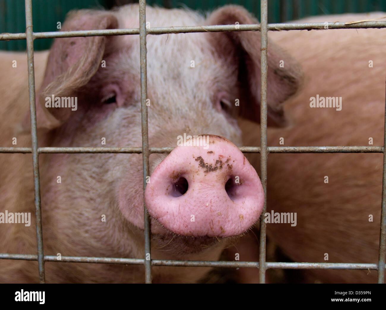 Tolle Schwein Drahtzaun Gebäude Fotos - Schaltplan Serie Circuit ...