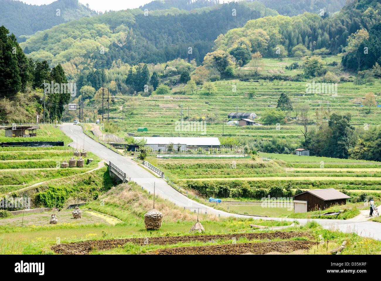 gr ne reisfelder und berge im l ndlichen japan stockfoto bild 53600387 alamy. Black Bedroom Furniture Sets. Home Design Ideas