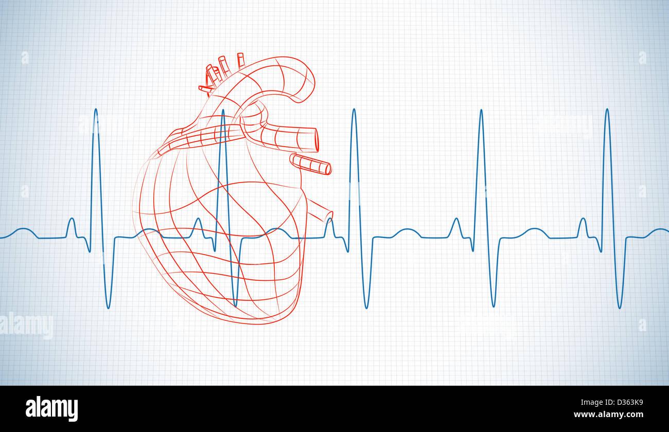 Charmant Markierte Diagramm Des Menschlichen Herzens Ideen ...