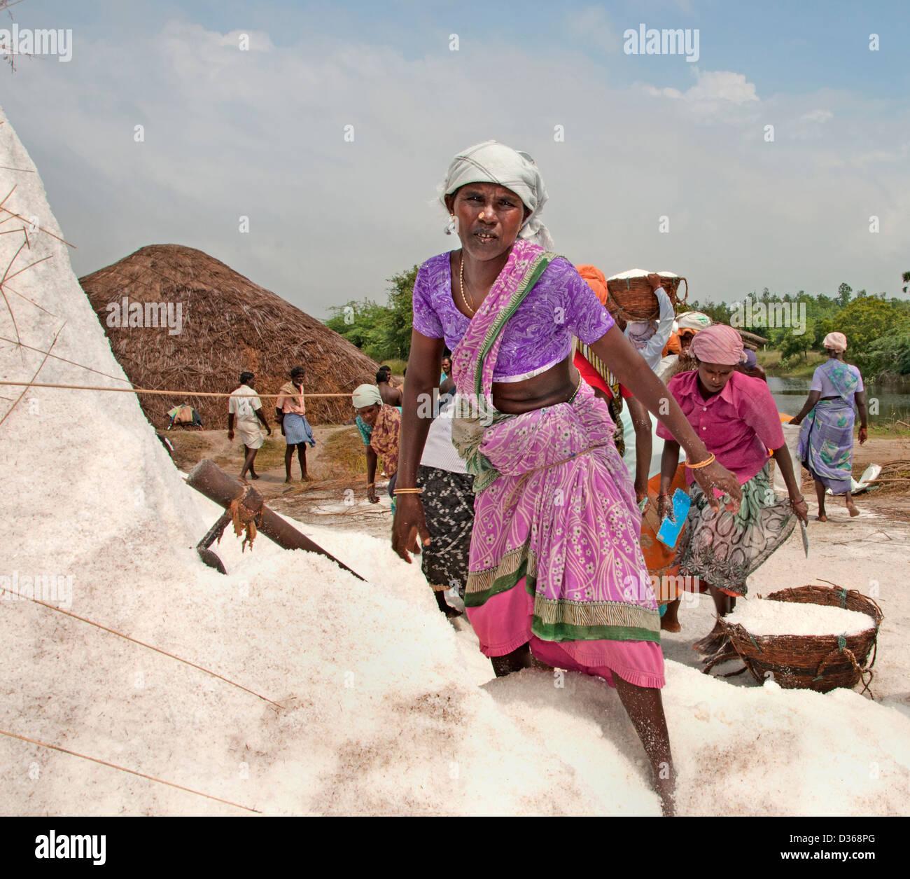 Puducherry (Pondicherry) Indien Tamil Nadu Salzproduktion Stockbild