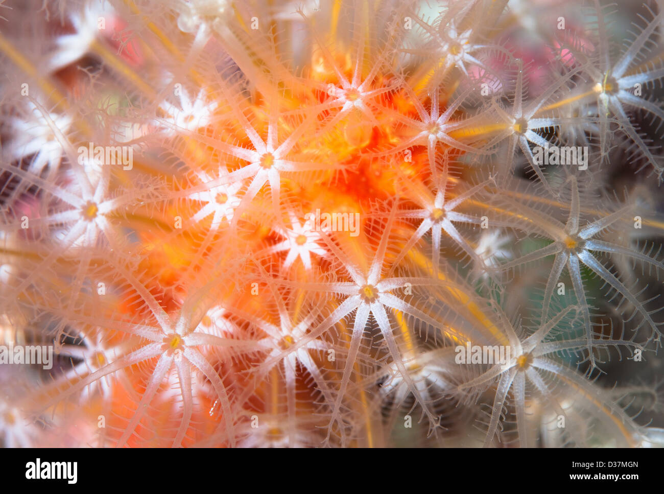 Nahaufnahme von bunte Unterwasserpflanzen Stockbild