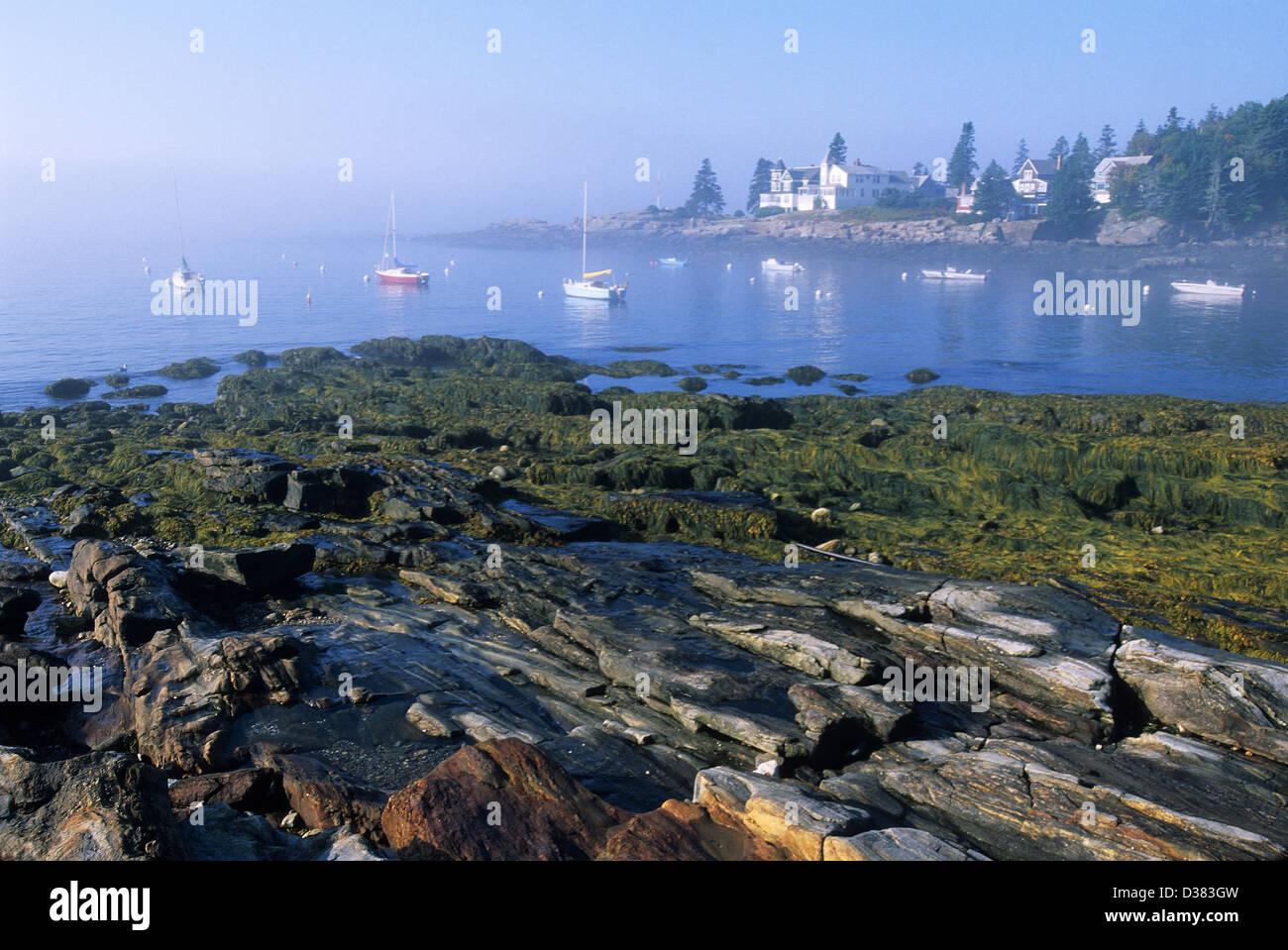 Elk282-1427 Maine, Ocean Point Ufer im Nebel Stockbild
