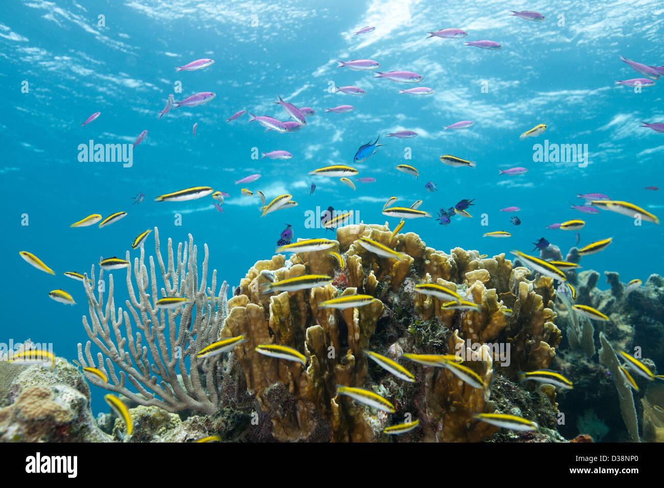 Bunte Fische im tropischen Korallenriff Stockbild