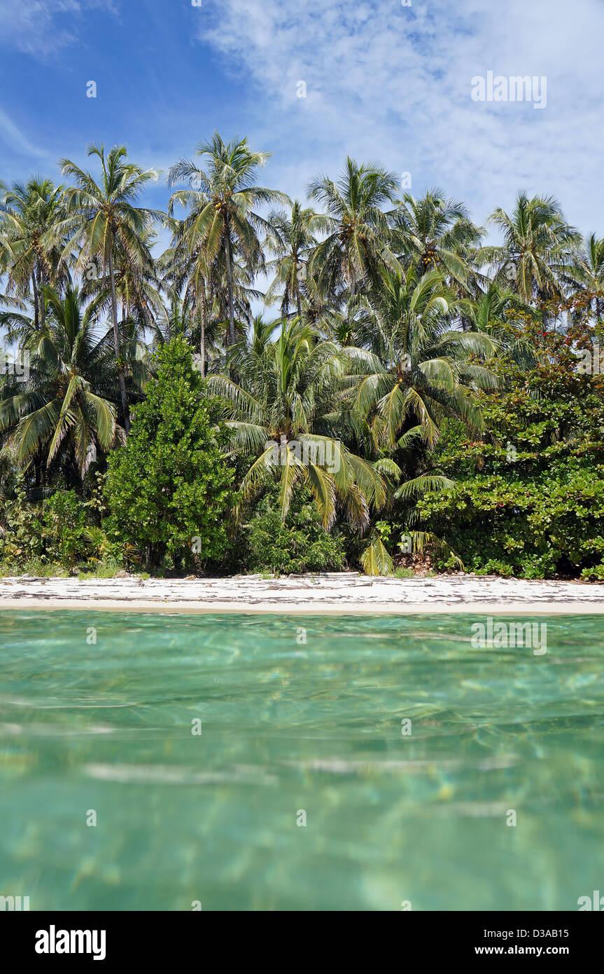 Tropischer Strand mit üppiger Vegetation, gesehen von der Wasseroberfläche, Karibik Stockbild