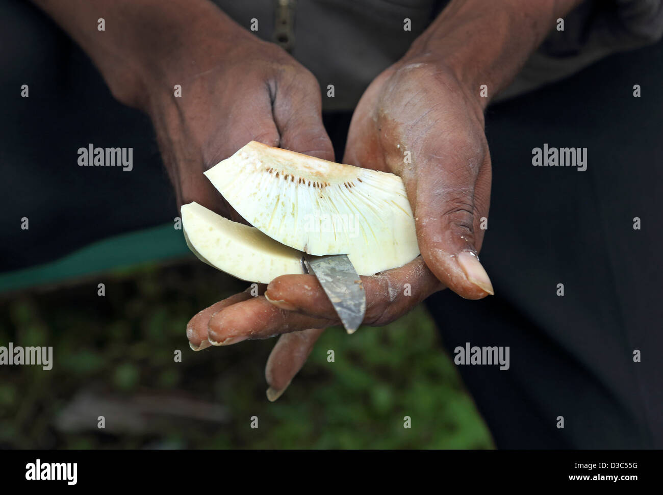 VORBEREITUNG DER BROTFRUCHT, CARIBBEAN Stockbild