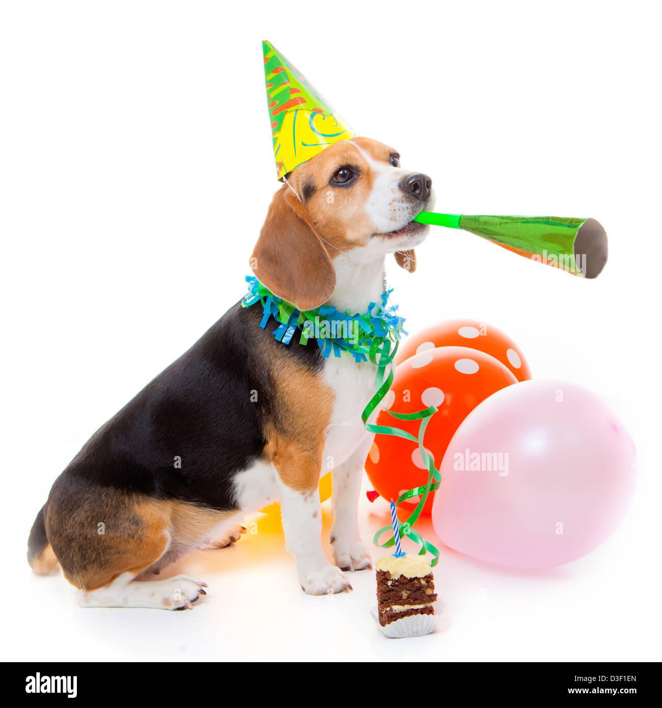 Hund Party Tier Feiert Geburtstag Oder Ein Jubiläum Stockfoto Bild