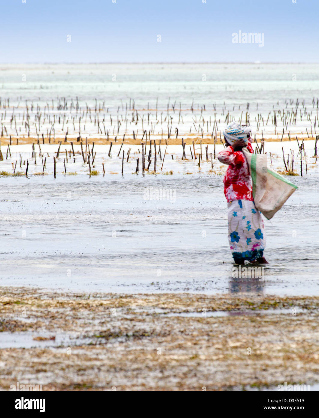 seaweed farmer in zanzibar stockfotos seaweed farmer in zanzibar bilder alamy. Black Bedroom Furniture Sets. Home Design Ideas