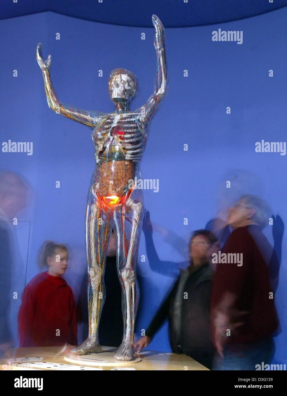 Großartig Die Systeme Des Körpers Galerie - Menschliche Anatomie ...