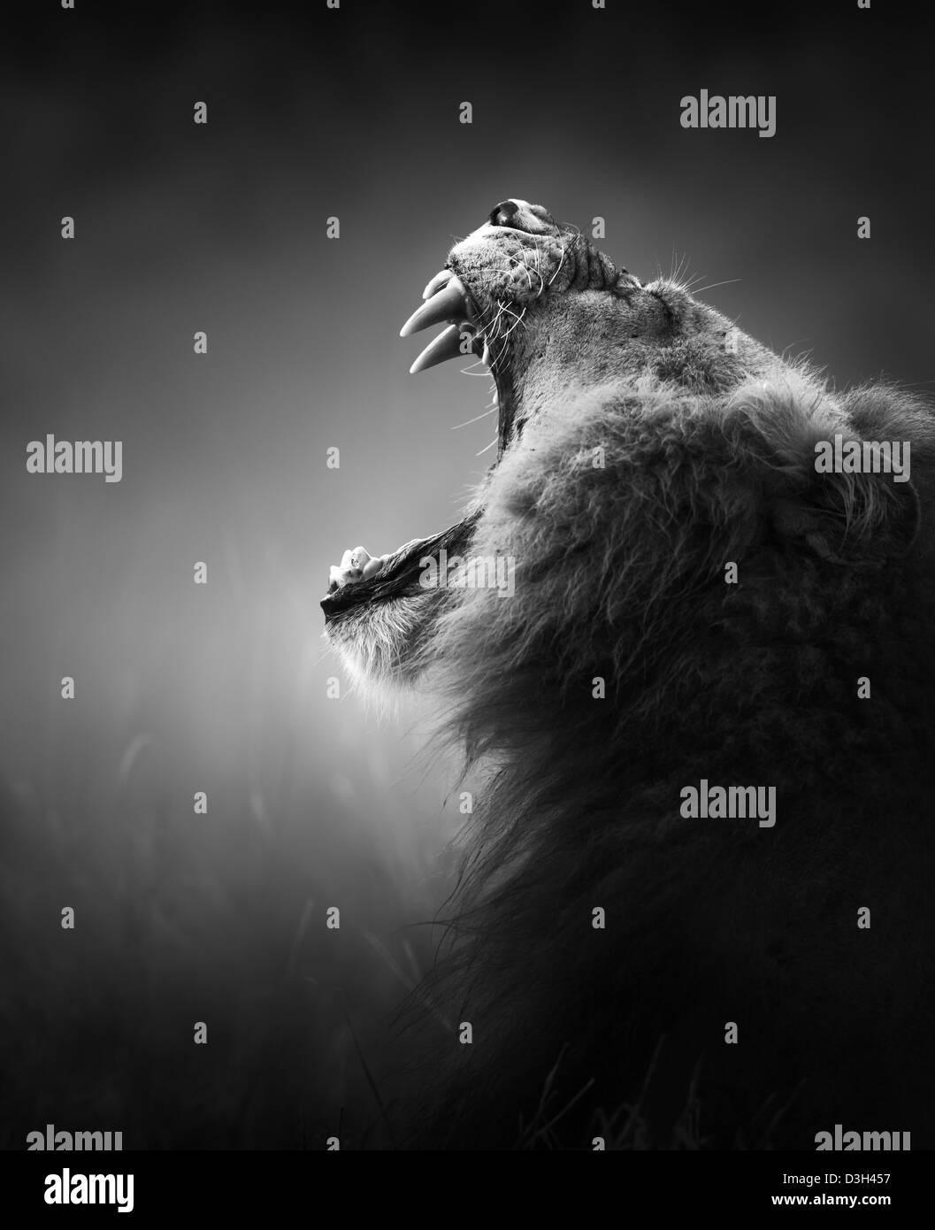 Lion Porträt - Krüger Nationalpark - Südafrika (künstlerische Verarbeitung) Stockbild