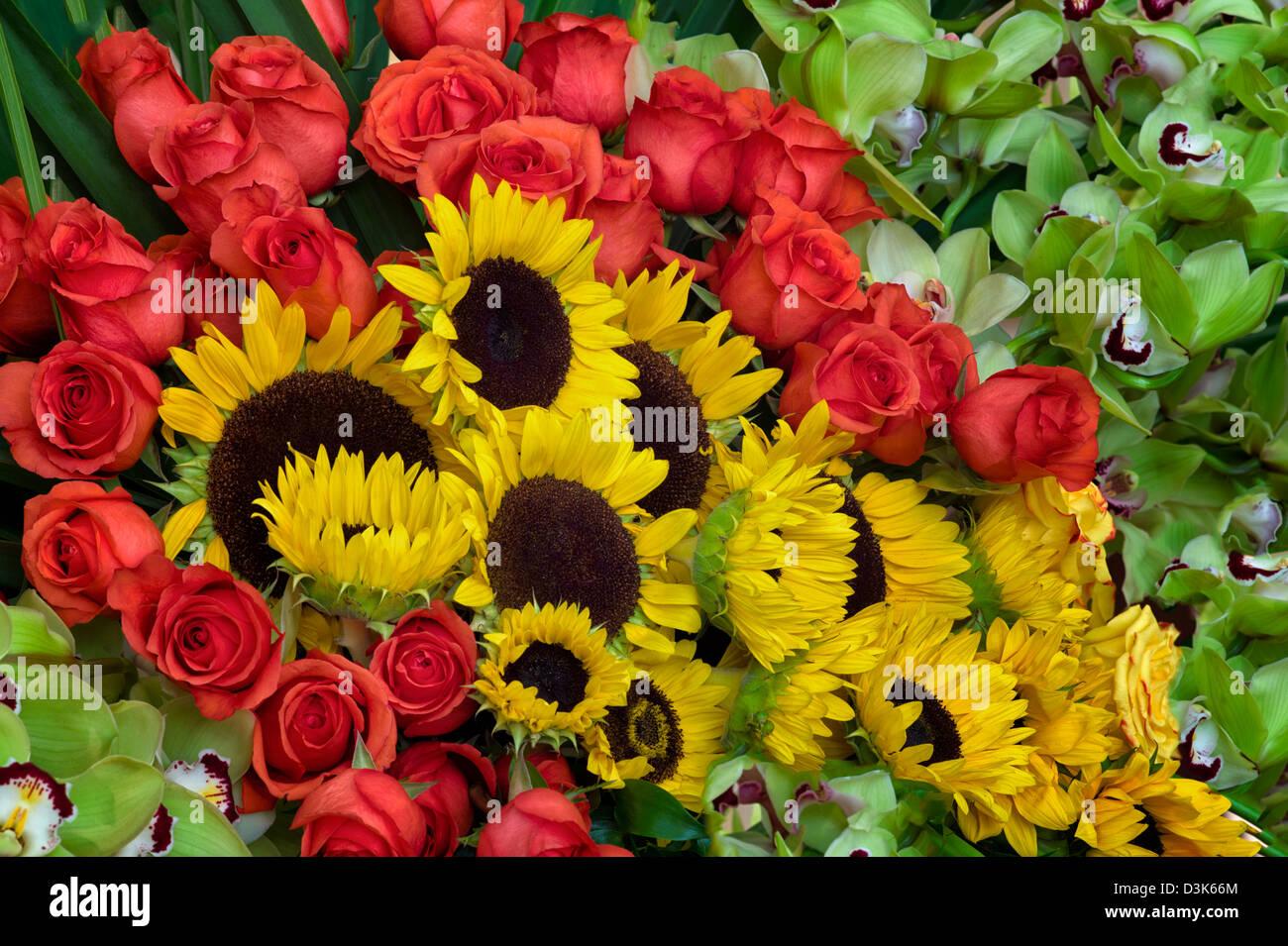 Blume-Anzeige von Sonnenblumen, Rosen und Orchideen. Stockbild