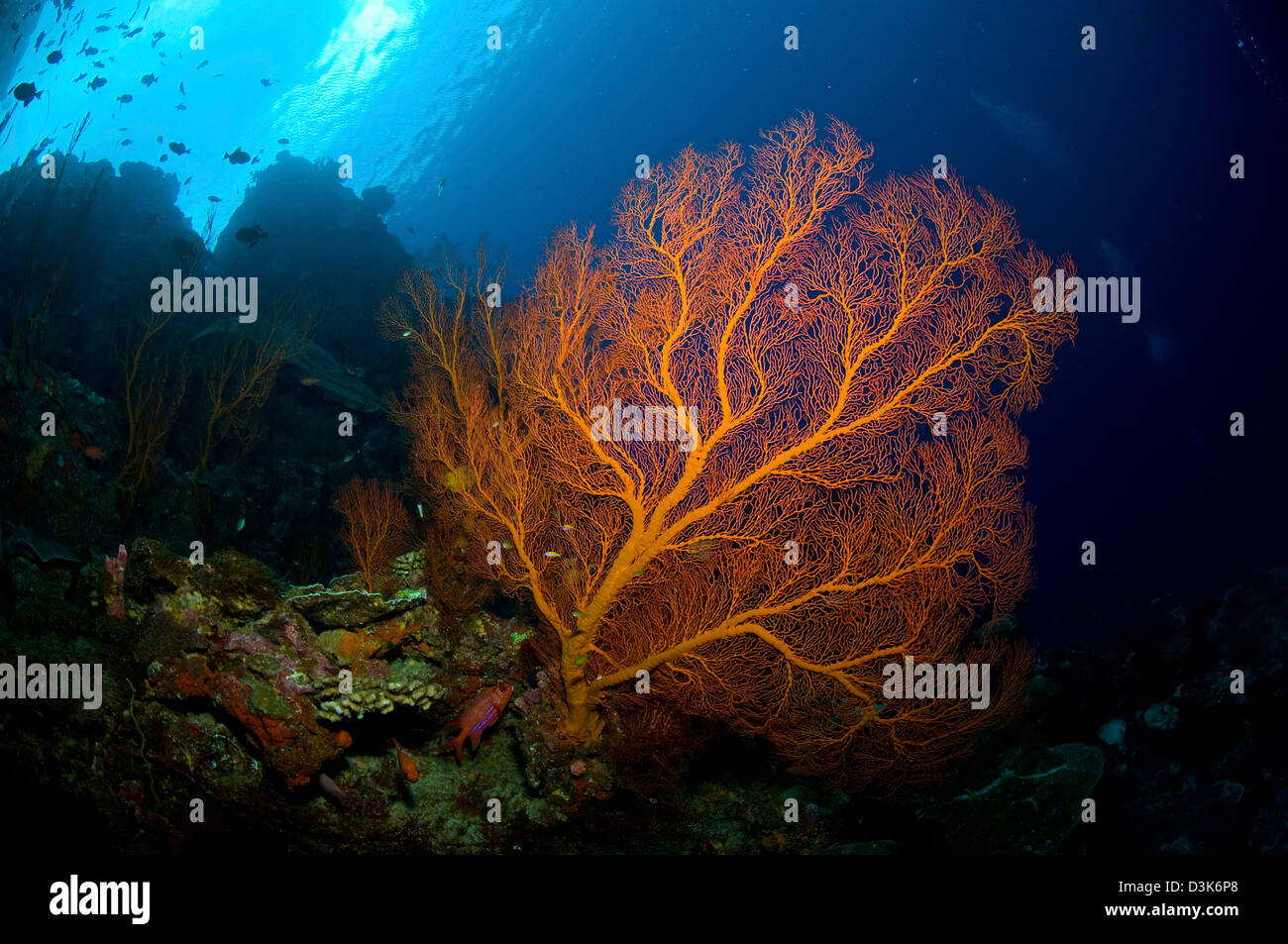 Colorful Sea Life Stockfotos & Colorful Sea Life Bilder - Alamy