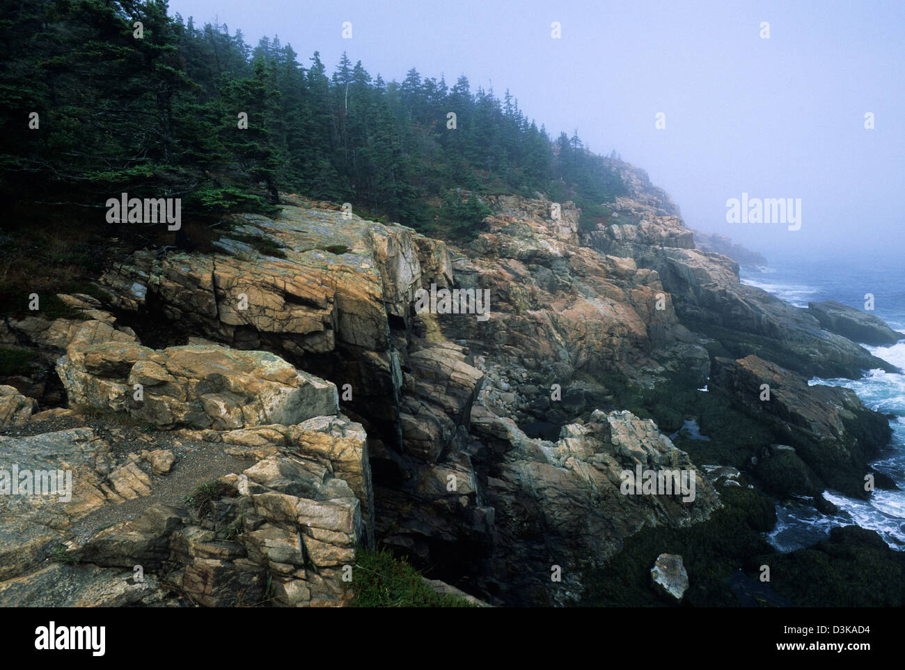 Elk282-2128 Maine, Mount Desert Island, Acadia National Park, Park Loop Road, Otter Point Stockbild