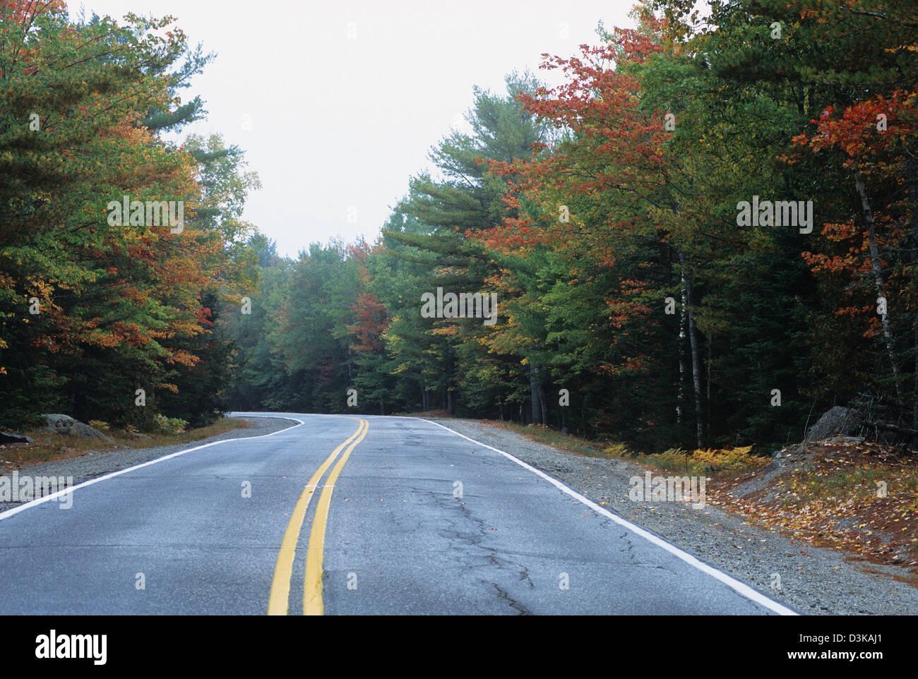 Elk282-2143 Maine, Acadia-Nationalpark, Mount Desert Island Park Loop Road mit Herbstlaub Stockbild