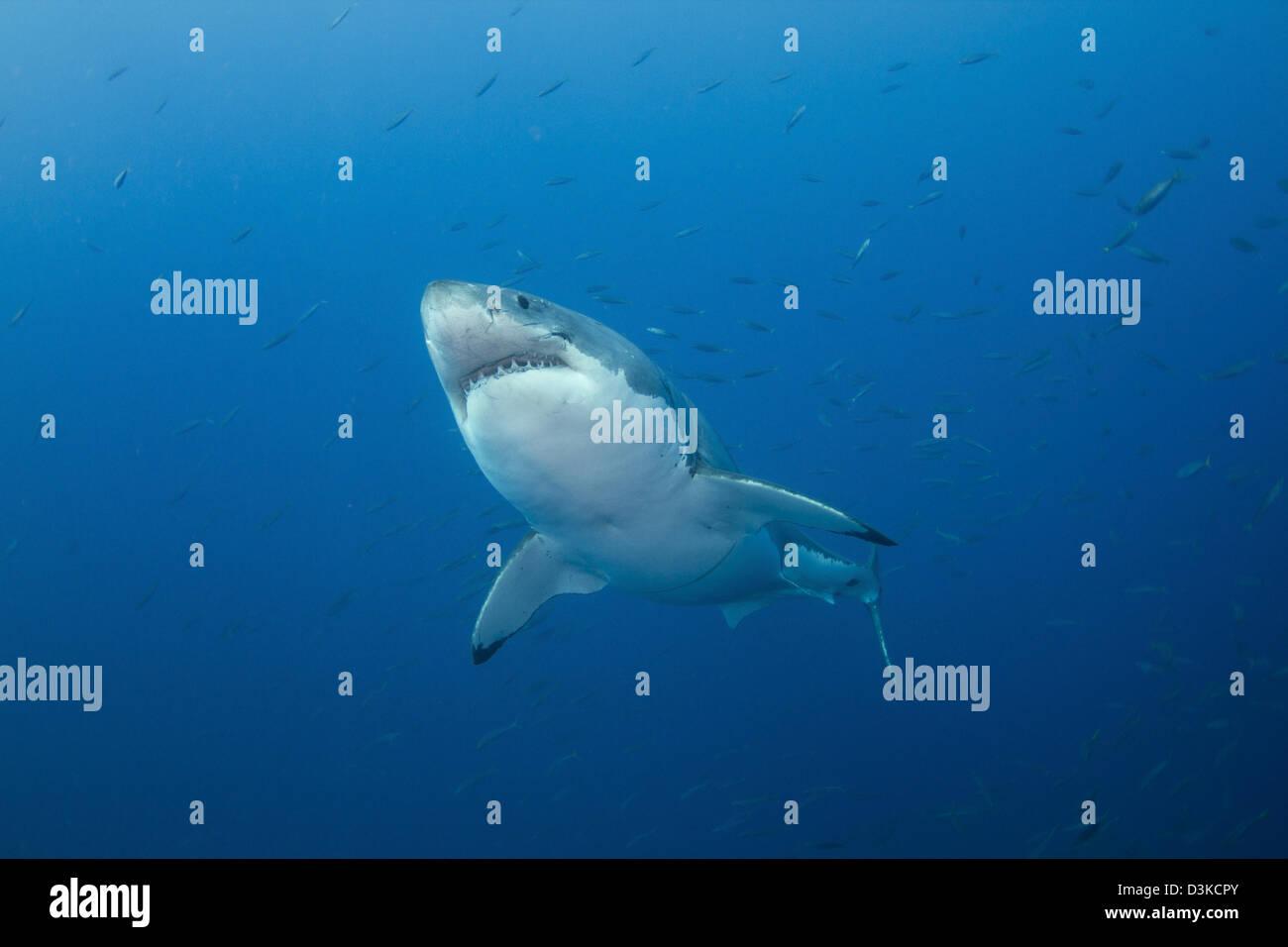 Wunderbar Hai äußere Anatomie Ideen - Anatomie Von Menschlichen ...