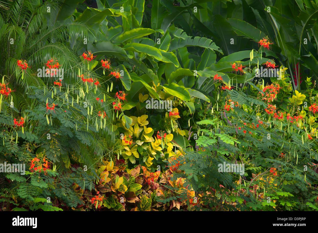 Gemischte tropischen Blumen. Hawaii, Big Island. Stockbild