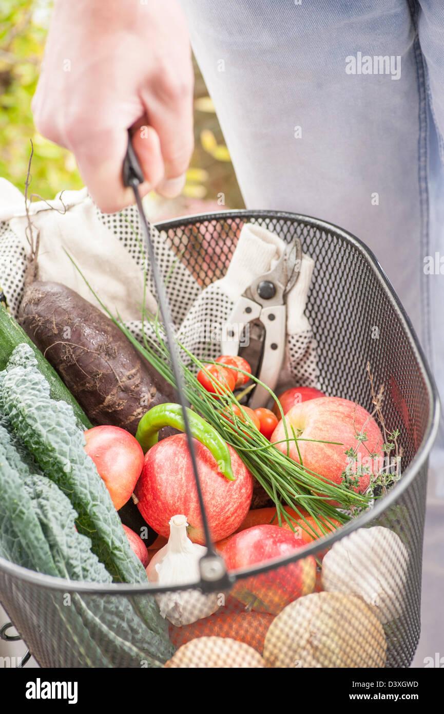 Aus einem Garten, gemischtes Obst und Gemüse ernten Stockbild