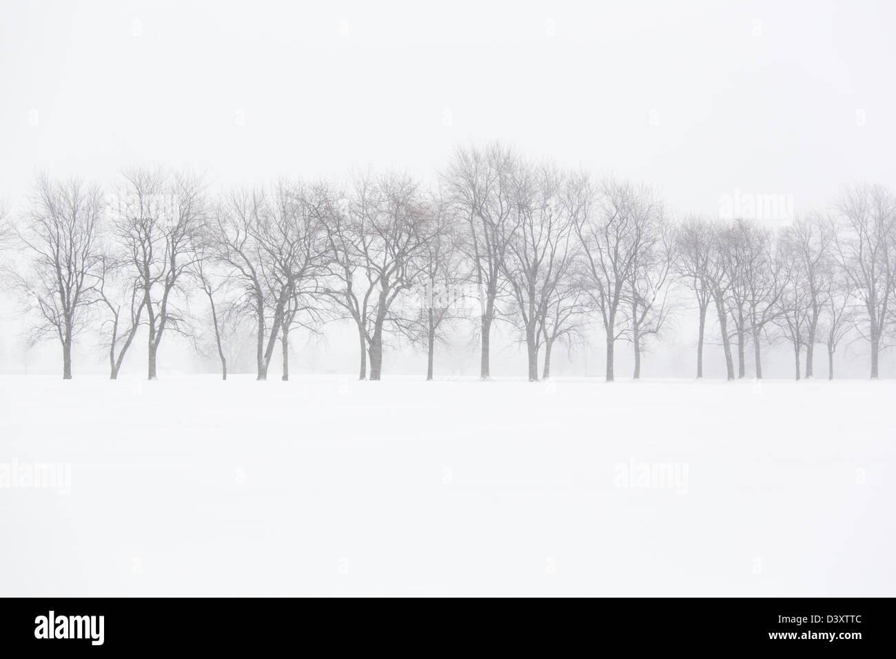 Bäume in Winterlandschaft Stockbild