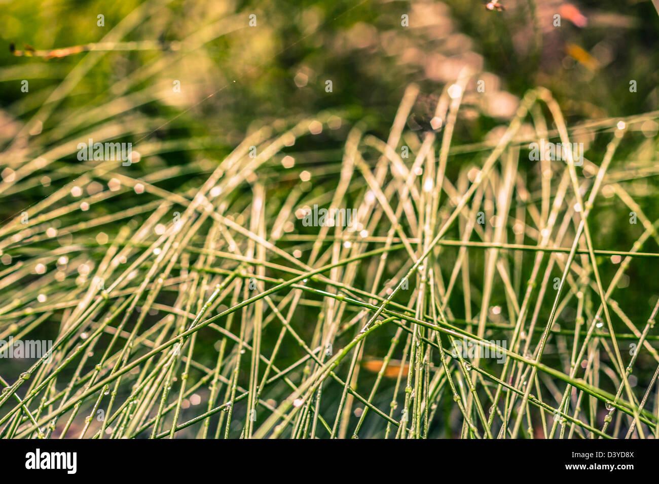 Detail der Rasen und Tau, grünen natürlichen Hintergrund. Stockbild